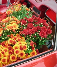Carflowers